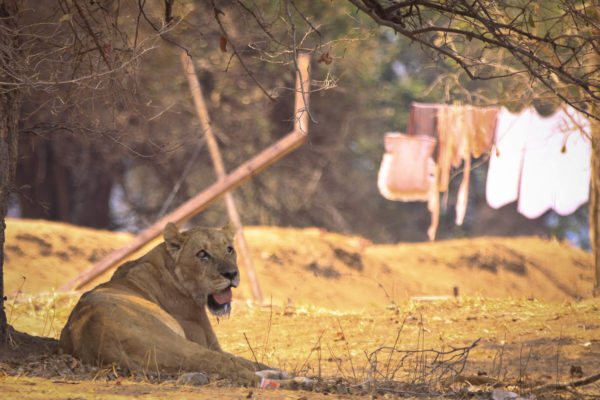 Get close to wildlife at Mana Pools